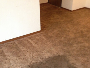 More carpet cleaning magic!